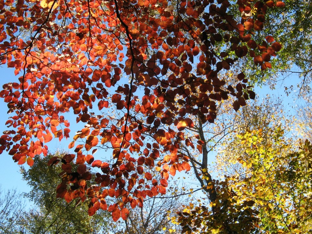 Some of the color on the trails at Tanglewood Park.