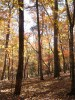 Picture of forest for article on how hikers can avoid getting lost in the wilderness